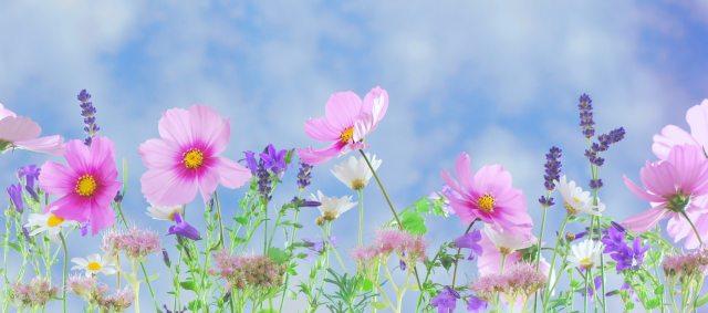 bloom-blossom-flora-40797 (1)